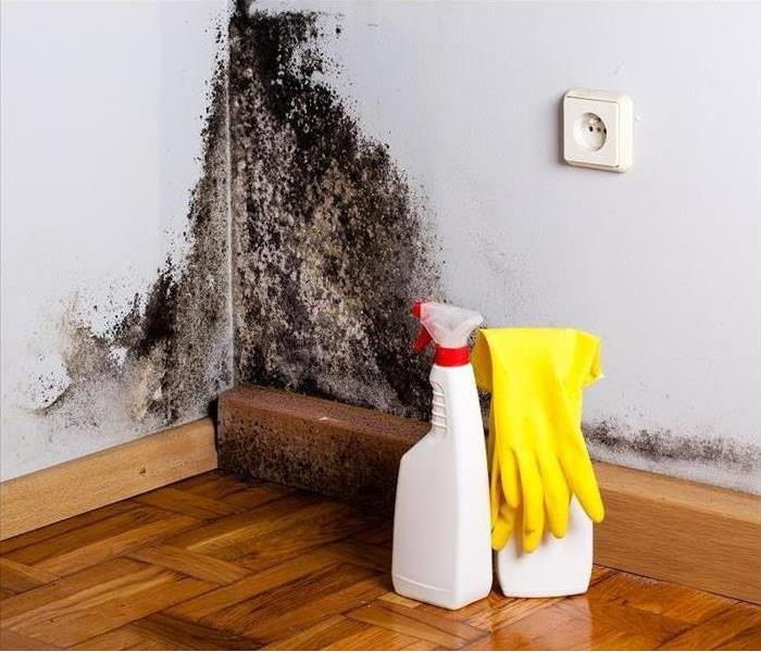 Mold Remediation Tips for Protecting Yourself from Mold During Cleanup