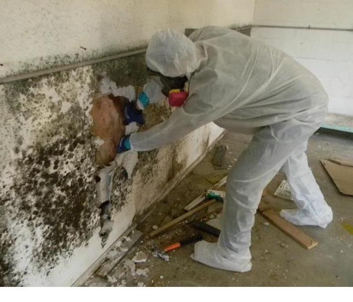 Mold Remediation Does Your Birmingham Home Have A Mold Problem?