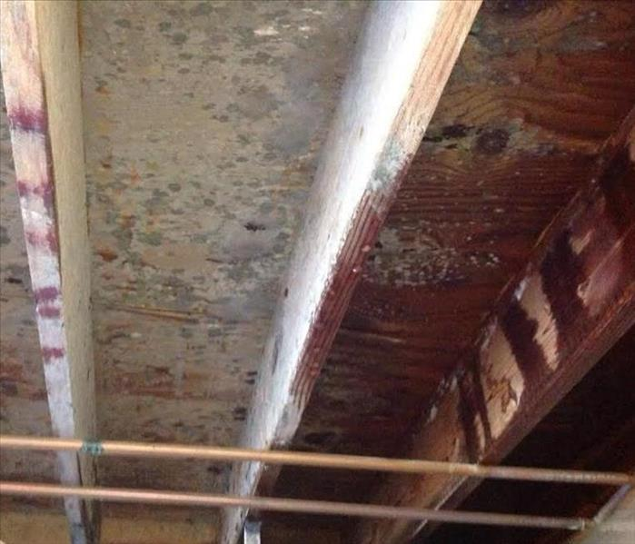 Mold Remediation Mold in Schools